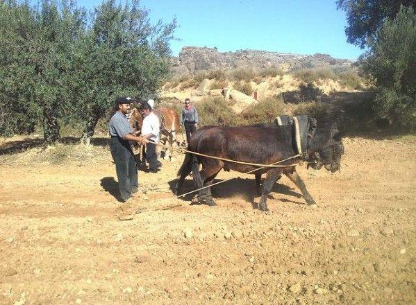 Albelda celebra su particular fiesta de la Siembra