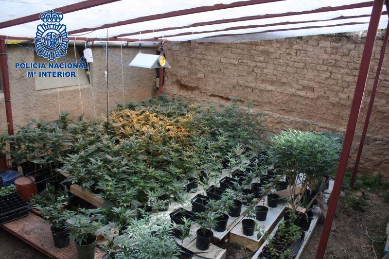 Desmantelada en Albelda una plantación de marihuana